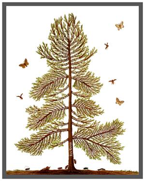 Academic Family Tree